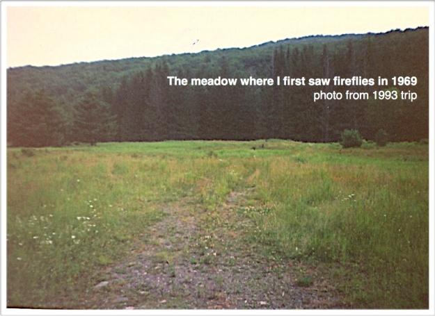 firefly meadow