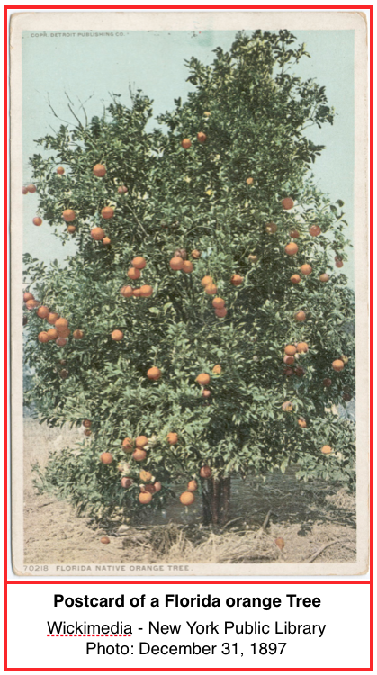 Orange Tree INT.png