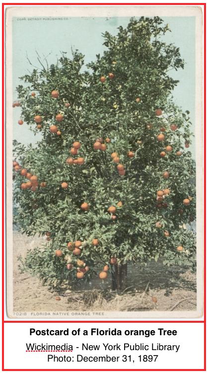Orange Tree INT.png
